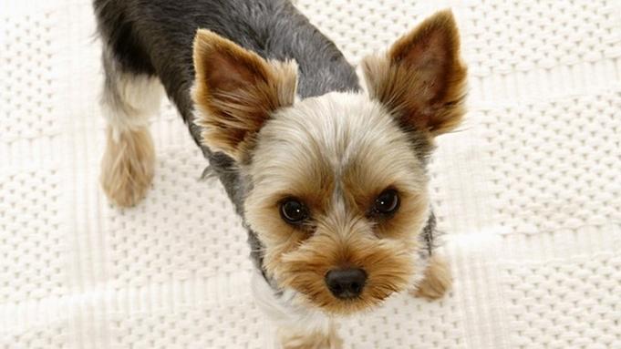 【愛犬同伴OK】ワンちゃんと過ごす寛ぎの旅♪/創作ディナー