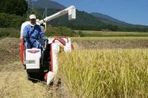 稲刈りをしています♪お米の美味しい妙高高原へぜひお越しください!