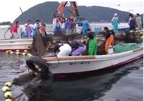 定置網漁見学も承ります。定置網漁を見学し、とれたての魚を船上でお刺身にしてお召し上がり頂けます。