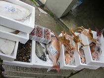 今朝仕入れた日本海の幸