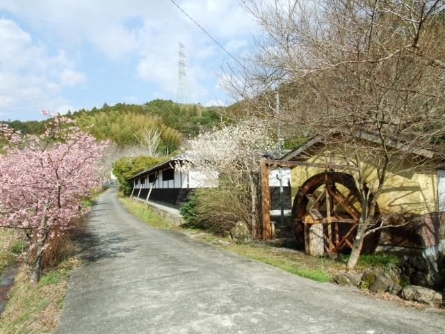 春は、梅・桜がきれいです。