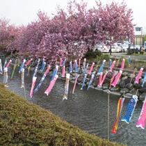 *【館内の飾りつけ/こいのぼり】日本の風情を大切に。季節ごとの飾りつけを行っております。