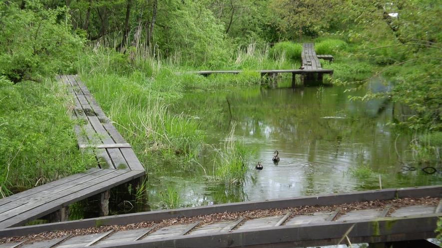 *【遊歩道】清々しい湧き水がなんとも涼しげ。夏に人気のお散歩コースです。