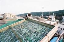 細島商業港(しょうぎょうこう)