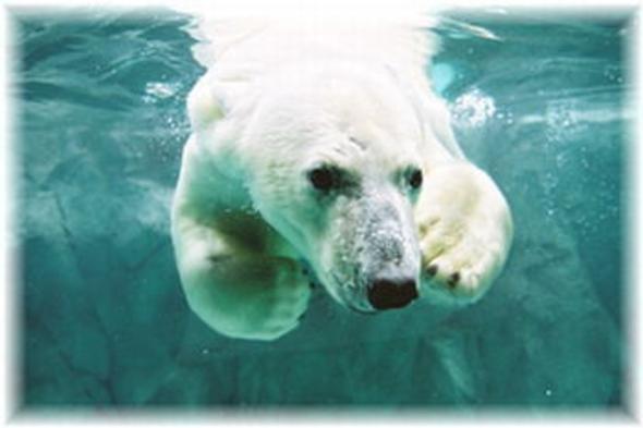 ●一番人気●[現金特価] 旭山動物園チケット付プラン!カップル・ファミリー大満足プラン