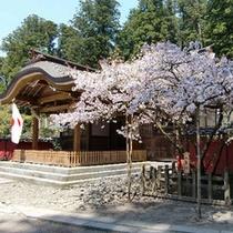 二荒山神社の八重桜