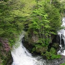 *竜頭ノ滝(6月)
