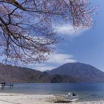 中禅寺湖畔千手ヶ浜のオオヤマ桜