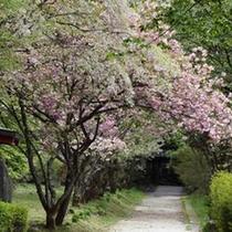 憾満ガ淵公園の桜