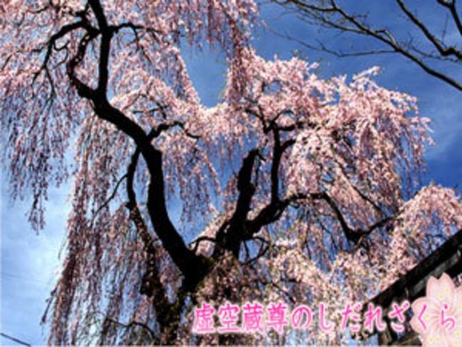 虚空蔵尊のしだれ桜