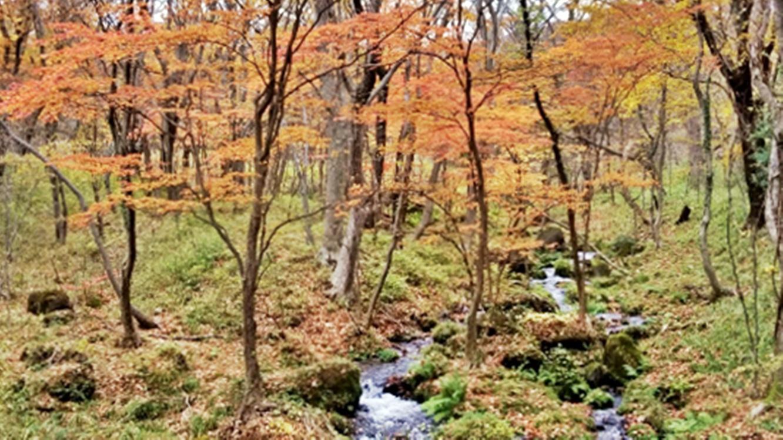 *【お庭/秋】オーナーお気に入りの場所♪我が家にも小さい秋がやってきます。