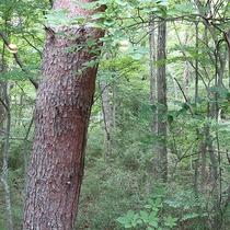 *【部屋からの景色一例】窓を開けるとそこは森の中