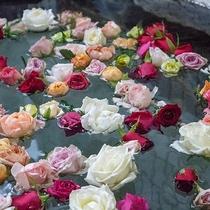 *【1階・貸切風呂/バラ風呂】契約バラ農園から直接届く摘みたてのバラを贅沢に浮かべたお風呂