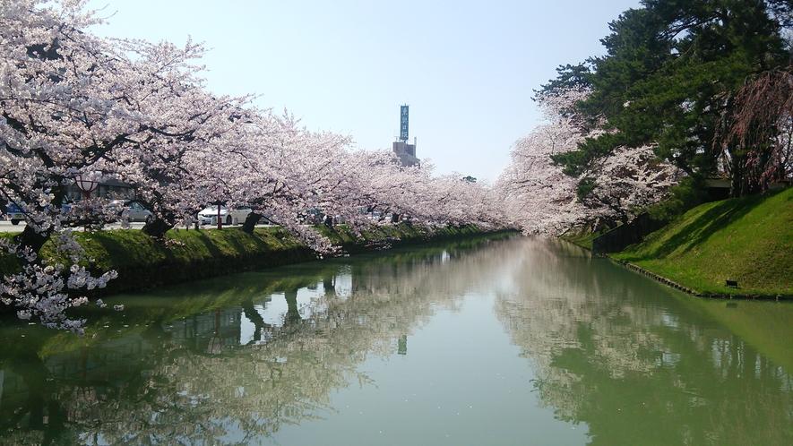 弘前桜祭り画像2