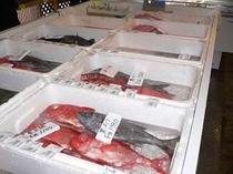 道の駅 富楽里岩井漁協 毎日水揚されたお魚が並びます