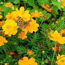 秋の花の回廊