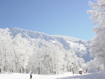 冬の紅葉峠