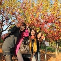 <周辺・景観>秋のりんご収穫体験 弘前りんご公園
