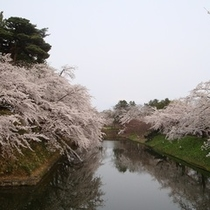<周辺・景観>弘前城の桜