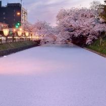 弘前公園外濠の花筏(はないかだ)。当館から車で50分