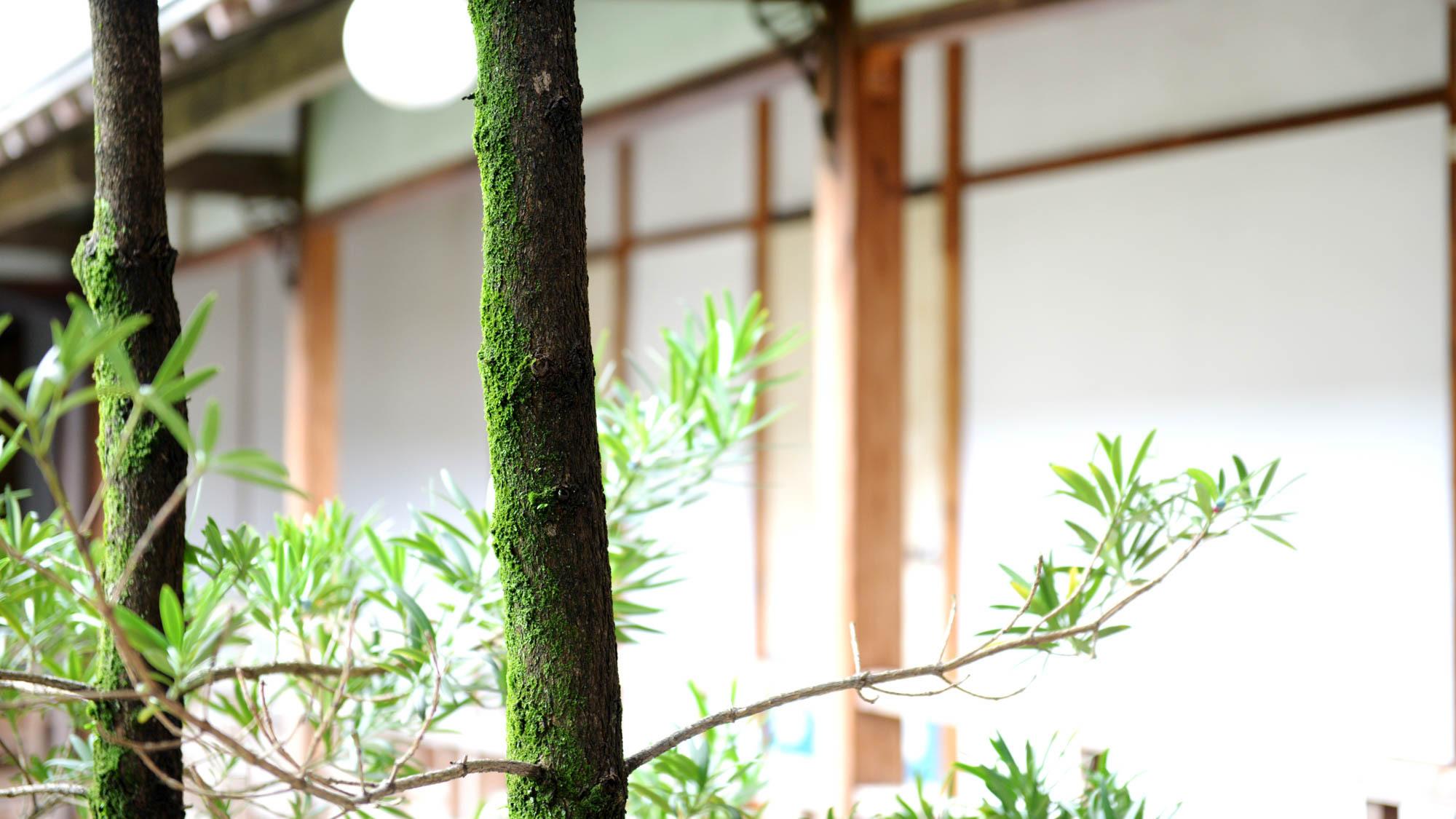 *【回廊】100年以上の歴史を積み重ね続けた建物と同じように、木々の苔からもまた歴史が感じられます。