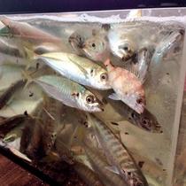 観光地引網体験/地引網で獲れた魚はお持ち帰りも可能です。