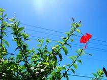 【周辺景色】南国の日差しがたっぷり降り注ぎます