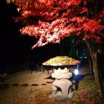 秋のお庭ライトアップ