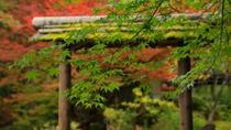 日本庭園-問