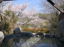 大浴場の露天風呂では、さくらを見ながら温泉が楽しめる