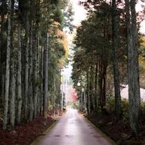 杉林に囲まれた坂道。ここをのぼって、つきあたりが…!