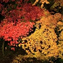 秋の夜。雨が降った後は、こんなに色が艶めくんです。