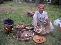 9・22天燃マイタケ大収穫 パフィオ庭で親父ときのこ