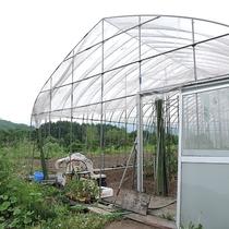 *【おやじ農園】季節の野菜を育てています(一例)