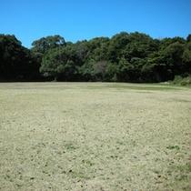 いっぱい走り回れる芝生広場♪