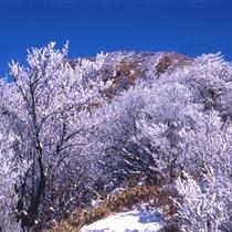 冬の雲仙、条件が合えば幻想的な霧氷がご覧頂けます!