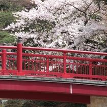 有馬橋と桜
