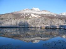 初冬 いもり池