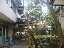樹齢100年の梅の木