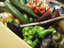 契約農家からの野菜