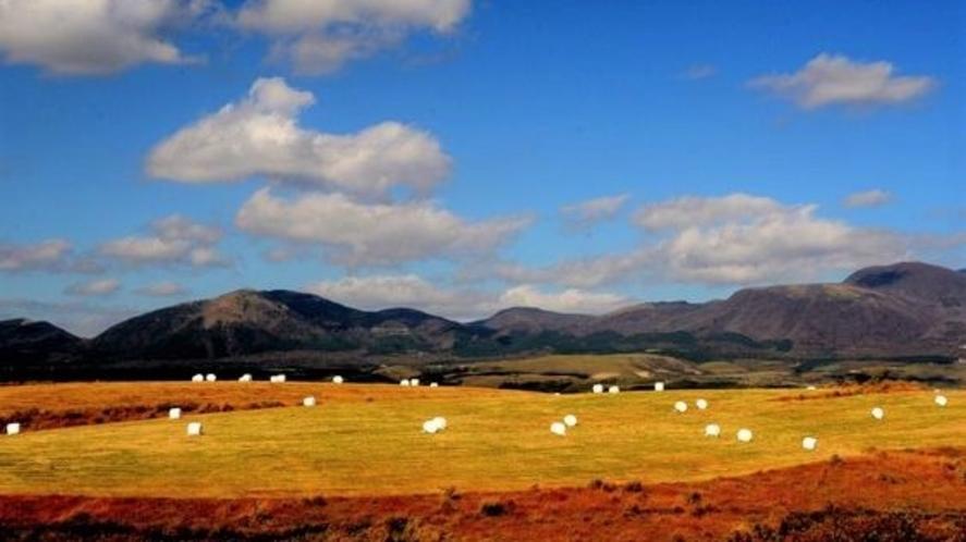 マシュマロの牧場