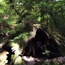 屋久杉などの原生林や苔の景観に心を癒されよう。