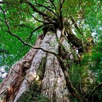 緑色豊かな原生林や苔の景観に心を癒されよう☆