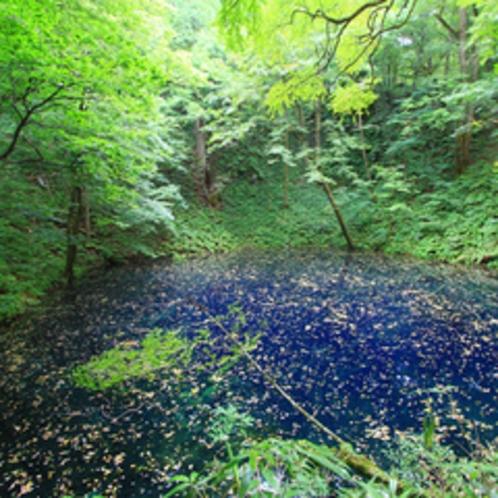 *青池/十二湖の中でも最も奥地にあり、コバルトブルーのような青さが特徴。