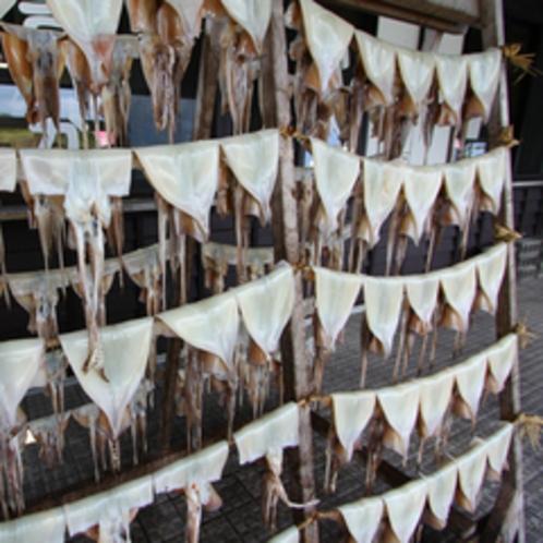 *イカのカーテン/まるでカーテンのように並ぶイカの生干し。この土地ならではの光景です。