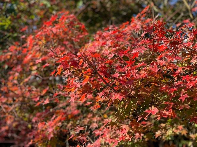 2020年12月の庭は紅葉色