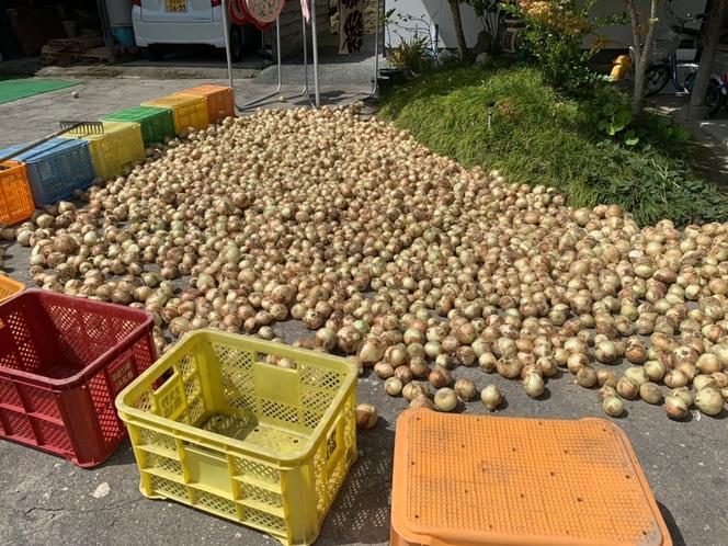 玉ねぎも無農薬自家栽培