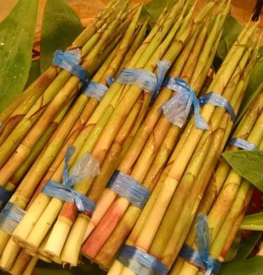 6月限定【志賀高原特薦】旬の山の幸♪「根曲がり竹」郷土会席料理プラン