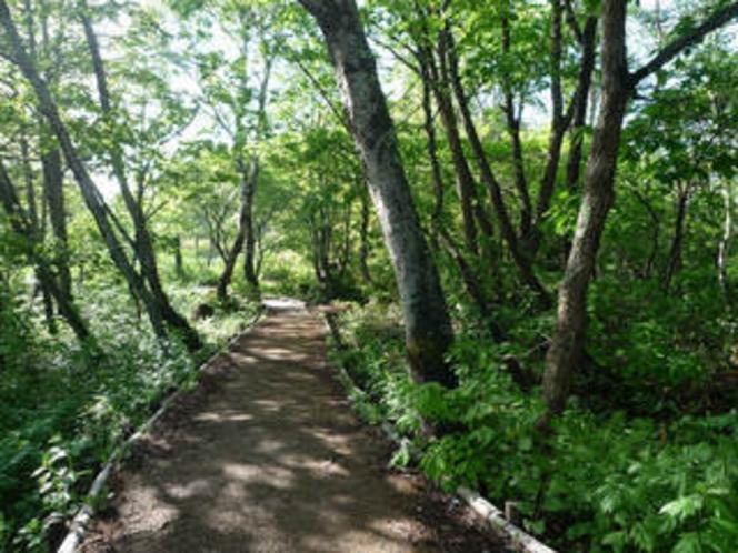 緑が美しい夏の志賀高原