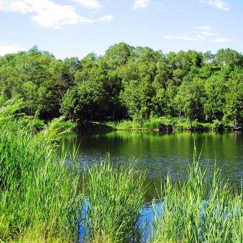 夏季には木戸池湖畔から美しい眺めが
